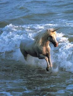 Unicorn in the ocean
