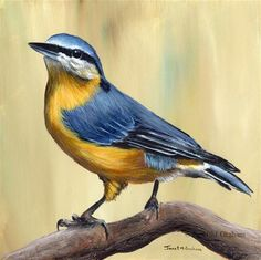 """Daily Paintworks - """"Nuthatch"""" - Original Fine Art for Sale - © Janet Graham"""