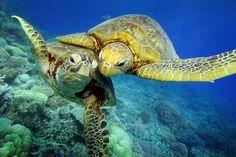 Des réserves marines toujours plus grandes! Avaaz, la force du peuple, gagne encore un combat, en gagnant l'instauration de la plus grande réserve marine du monde dans le Pacifique!