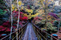 花貫渓谷,汐見滝吊り橋,紅葉,茨城県紅葉スポット,茨城県高萩市