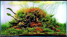 Favourites: `Deep Rooted` by Fabian Kussakawa This colourful Layout was within the 2012 AGA-Contest and didn`t make it into the Top 10, unbelievable!