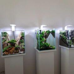 Aquarium Garden, Aquarium Landscape, Betta Fish Tank, Nature Aquarium, Home Aquarium, Aquarium Design, Aquarium Fish Tank, Planted Aquarium, Planted Betta Tank