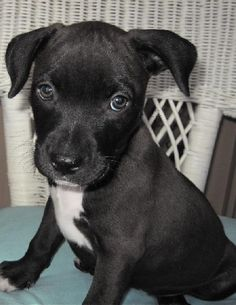 Molly's puppy JoJo