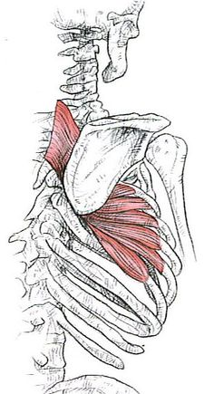 Rotator cuff strength or scapular stability…What comes first? | jessephysio