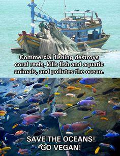 Save the oceans! Go vegan!