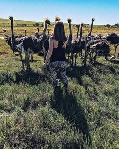The Ostrich, Africa Travel, South Africa, Couple Photos, Couples, Instagram Posts, Outdoor, Couple Pics, Outdoors