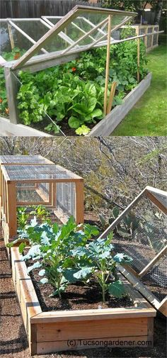 42 BEST tutorials on how to build amazing DIY greenhouses , simple cold frames and cost-effective hoop house even when you have a small budget and little carpentry skills! Everyone can have a productive winter garden and year round harvest! A Piece Of Rai #greenhouseeffect