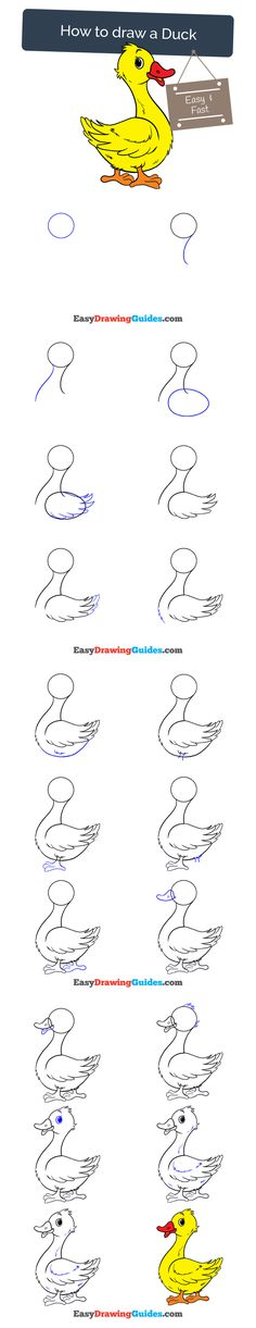 Learn How to Draw a Duck: Easy Step-by-Step Drawing Tutorial for Kids and Beginners. #duck #drawing #tutorial. See the full tutorial at https://easydrawingguides.com/how-to-draw-a-duck/