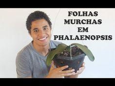 Agrônomo ensina a identificar murcha do fusarium em orquídeas - YouTube