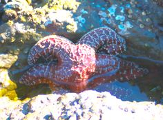 starfish sex ~ photo by: kate ripps
