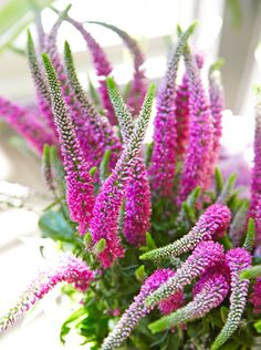 Veronica Flower ~ Lovely Rooftop Garden in Chicago - Traditional Home