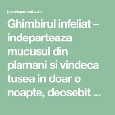 Ghimbirul infeliat – indeparteaza mucusul din plamani si vindeca tusea in doar o noapte, deosebit de bun pentru copii Clean Eating Recipes, Healthy Recipes, Dry Scalp, Herbal Medicine, Healthy Nutrition, Natural Oils, Good To Know, Natural Remedies, Health Tips