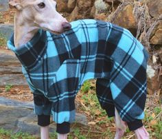 Unfortunately, not all dog breeds have the luxury of a built-in sweater, and that is where Pajamas for Dogs come in! These dog pajamas are made of fleece ..