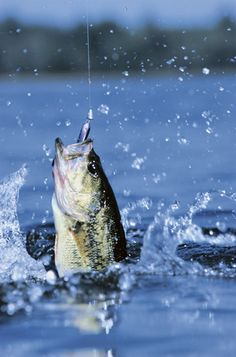 Bass Fishing Vacation Package - Central Florida