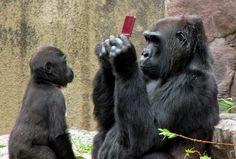 Gorilla mama & baby