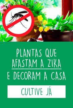 Você sabia que plantar em casa Alfazema, Manjericão e Hortelã afastam a Zika da sua casa? Estas são algumas plantas repelentes naturais que além de afastarem mosquitos, traças, moscas e pulgas de você e de sua casa, também podem ser usadas para temperar, para fazer chá e infusões e deixam sua casa mais bonita. #plantas #zika