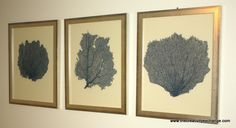 DIY Tutorial: Painted and Framed Sea Fan Collections