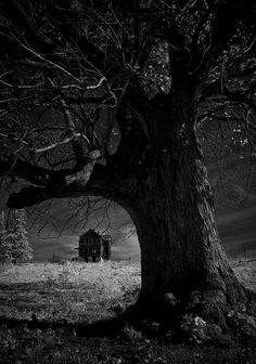 Il bosco; notturno  g.