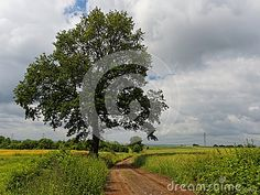 Single tree and road across field