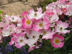 images of flowers | Pink and White Flowers Wallpaper