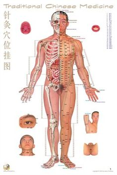 Traditional Chinese Medicine Posters: Acupoint Chart Front View, $9.95 from MagCloud
