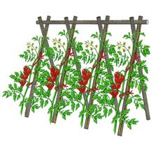 Secrets to Growing Tomatoes in Containers - Urban Gardening Vertical Vegetable Gardens, Home Vegetable Garden, Tomato Garden, Potager Garden, Balcony Garden, Garden Planters, Potager Bio, Growing Tomatoes In Containers, Raised Beds