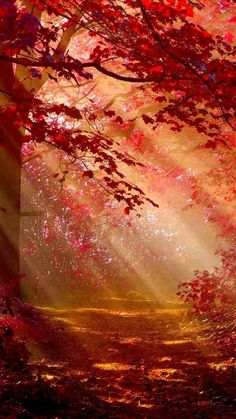 Sunlight In Autumn Forest In Resolution Forest Wallpaper, Anime Scenery Wallpaper, Fall Wallpaper, Fantasy Art Landscapes, Fantasy Landscape, Beautiful Landscapes, Aesthetic Backgrounds, Aesthetic Wallpapers, Arte 8 Bits