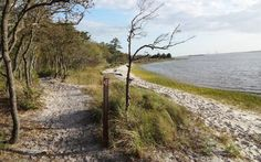 Hiking in Carolina Beach State Park - Sugarloaf Trail 3 miles http://www.ncparks.gov/Visit/parks/cabe/activities