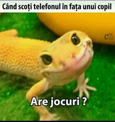 Aici o să pun poze amuzante și cringe. Sunt luate de pe net. O să mai… #aleator # Aleator # amreading # books # wattpad Smiling Animals, Cute Animals, Christian Memes, Sin City, Bad Timing, Animals Beautiful, Funny Pictures, Funny Pics, Wattpad