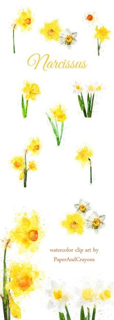 Most recent Pic Narcissus graphic Tips Long-lived daffodils are the easiest to build as well as hottest spring blooming bulbs. Catalogue Design, Daffodil Bulbs, Daffodils, Printable Planner Stickers, Printable Invitations, Printables, Daffodil Tattoo, Narcissus Flower, Photoshop