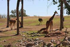 Best of USA: Phoneix Zoo -Arizona