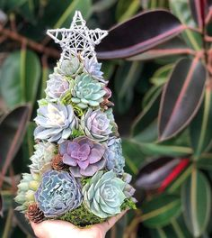 Echeveria, Succulent Tree, Succulent Ideas, Cactus, Little Christmas Trees, Christmas Ideas, Traditional Christmas Tree, Planting Plan, Holiday Centerpieces