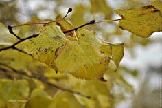 """Купить Фотокартина """"Осенние листья"""" - фотокартина, природа, пейзаж, вода, фотокартина для интерьера, фотокартина авторская"""