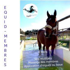 Forfait 3 soins pour le confort des membres Massage, Horses, Animals, Health Club, Mud, Plunge Pool, Horse, Animales, Animaux