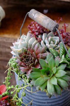 #succulents #garden #containergarden