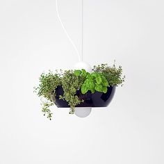 "Known for their innovative designs, Object Interface brings you the Well Light Planter. Named after a ""well glass"" diffuser, this light has a removable shade. Boutique Design, A Boutique, Light Well, Decorative Planters, Ceiling Rose, Glass Diffuser, Garden Gifts, Lush Green, Small Flowers"