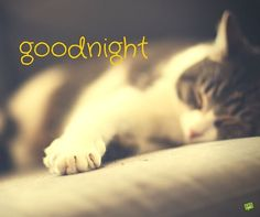 Good night image with a cat sleeping and a wish for a peaceful night. Cute Good Night, Good Night Moon, Good Night Image, Good Night Quotes, Good Morning Good Night, Morning Quotes, Greetings For The Day, Good Night Greetings, Good Nyt Images