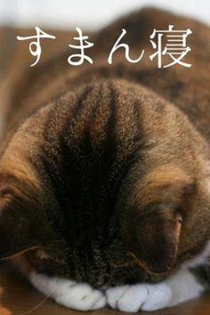 ごめん寝、すまん寝猫たちがかわいすぎてキュン死する画像集 - NAVER まとめ