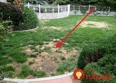 Krásny trávnik za 1 týždeň: Profesionál ukázal jednoduchý trik, ako zakryť škvrny a urýchliť rast trávy v rekordnom čase! Garden Inspiration, Garden Tools, Lawn, Diy And Crafts, Gardening, Plants, Outdoor, Home Decor, Soda