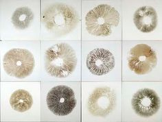 Chris Drury Spore Prints