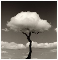 A white cloud passing by a leafless tree, creating an amazing image.