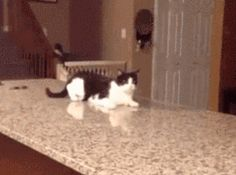 16 Kittens Who Failed So Hard They Almost Won