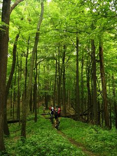 Brown County State Park - Nashville, IN. 25 miles of singletrack. Was named one of the 33 best trail systems in North America. $7 fee to get into park. Must ride this!