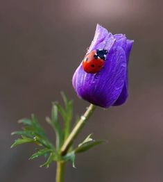 Cute Small Animals, Animals And Pets, Beautiful Bugs, Beautiful Flowers, Beautiful Pictures, Photo Coccinelle, Hedgehog Craft, Virtual Flowers, Poppies
