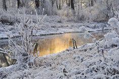 Free Photo: Snow, Trees, Winter, Water, Season - Free Image on Pixabay - 21979