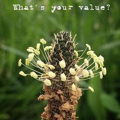 What is the value of your life? Do the test on https://www.thinkoneweek.com/value-life-quiz #value #life #test #g