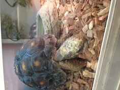 Turtoise!