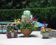 arrangements de fleurs de jardin en pots - marguerites jaunes et rouges,pétunias et géraniums