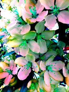 This magical photograph of small flowers.     Beautiful Bright color image. Colorful digital art , Apple flowers.
