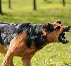 Use a dog behaviourist Manchester - http://www.dog-ramblers.co.uk/why-use-a-dog-behaviourist/
